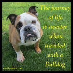 ❤ ❤ ❤ Posted on Chicago English Bulldog Rescue, Inc.