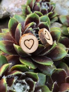 Mother's Day gift, wood earrings with 10 mm diameter, stainless steel plug round wooden stud earrings wood, boho jewelry, Dread jewelry Dread Jewelry, Hippie Jewelry, Heart Jewelry, Wooden Earrings, Leaf Earrings, Stud Earrings, Perfect Gift For Him, Gifts For Him, Earring Hanger
