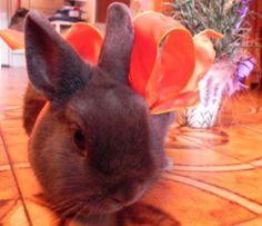 cos'è la caccia alle uova del coniglietto pasquale?/ Easter Bunny and chocolate eggs hunting