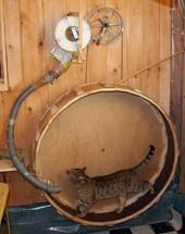 Make Your Own Enrichment Toys For Cats