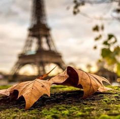 paris, autumn, and fall resmi
