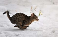 House cats can sprint over 30 miles per hour.