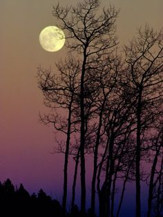 A Full Moon Shines on Winters Leafless Branches Photographic Print