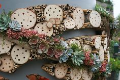 bee-hotel from Amy Curtis Floristry mixes colorful succulents with drilled logs and bamboo, appears easily moved to rehang