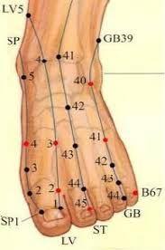 Resultat d'imatges de meridianul stomacului