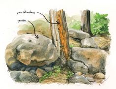 How to Paint with Pen, Ink and Watercolour   Features   Painters Online