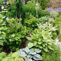 wood plants in small shady backyard waldpflanzen in einem schattigen hinterhof berlin nelka. Black Bedroom Furniture Sets. Home Design Ideas