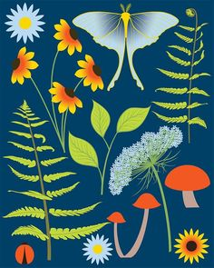 Woodland plants and animals found in the summer forest. Ladybug and Blue moth, Fern leaf print, black eyed susan and Queen Anne's lace flower.