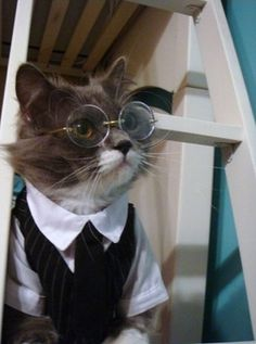 in honor of national take your cat to the vet week.- OMG I JUST DIED OF A CUTE OVERLOAD. Jules next Halloween costume.