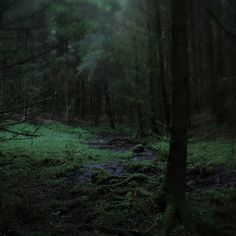 When you walk in dark forest   see the darkness surround you  but don't be afraid because that not going hurt you.
