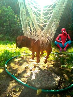 Dog has been catched by Spider Man