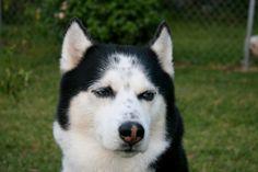 My best friend Chako, sure do miss him!