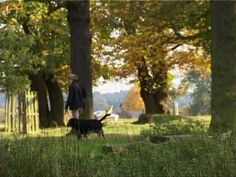 Richmond Park, at almost 1000 hectares acres), is the largest Royal Park in London and is home to around 650 free roaming deer. The pastoral landscape . Beautiful Places In The World, Most Beautiful, Richmond Park, Royal Park, Deer Park, Acre, Countryside, London, Landscape