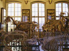 Musée Fragonard de l'Ecole vétérinaire de Maisons-Alfort