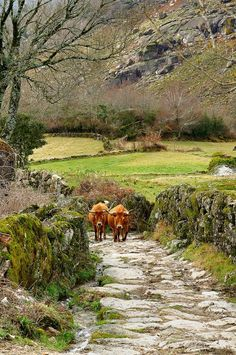 I Like It Peaceful And Quiet...Always At Gerês National Park,In My Country Portugal !... http://samissomarspace.wordpress.com