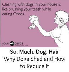 Great tips on how to reduce your dog's shedding - #blog #doggrooming #dogcare @dogIDs