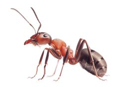 Ant Control & Ant Killer Products | Do My Own Pest Control