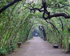 Jardines  Boboli Florencia