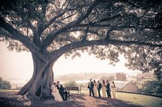 Beautiful wedding venues with trees
