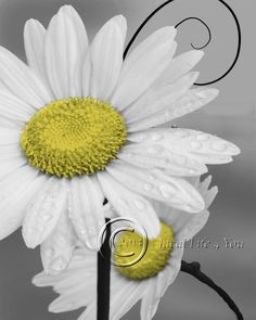 Daisy Left-Yellow Home Decor Picture Wall Art Floral Bedroom-Living Room-Kids 1