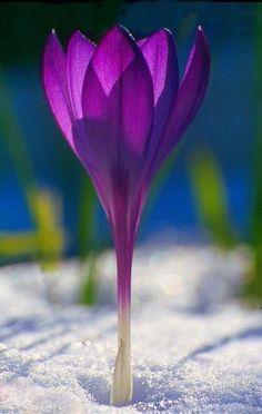 Il fascino di un fiore