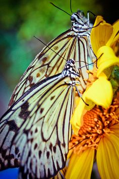 Butterfly by iamkatiekate, via Flickr