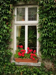 beauty in the window of simplicity, ireland