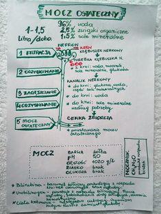 Układ wydalniczy - powstawanie moczu #biologia7 #układwydalniczy #mocz #piesekwkratke #rysnotka #rysnotki School Notes, Self Improvement, Psychology, Infographic, Homeschool, Knowledge, Language, Study, Education