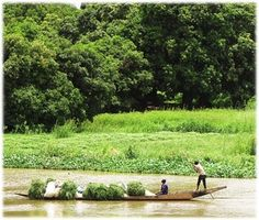 Not up but long - a wooden dugout river canoe or pirougue is used to transport fresh-cut forage for animal feed. Niger River. J'vois nice Africa!