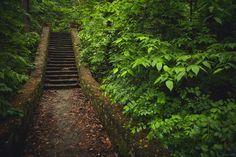 https://flic.kr/p/sb9bQM   forest stairs