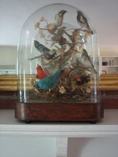 Incredible c1870 Taxidermy 10 Bird Species Under Original Blown Glass Dome & Inlaid Base