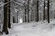 Snow | Harz
