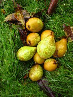 Päron i sköna september