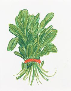 Arugula from Tuesday Liana Jegers Pencil Illustration, Botanical Art, Aesthetic Art, Cute Art, Art Inspo, Art Reference, Art Drawings, Sketches, Art Prints