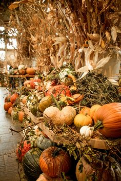 """Lover of all things autumn/HalloweenFall year 'round!🎃🍂👻🍃💀""""Every leaf speaks bliss to me, fluttering from the autumn tree"""" -Emily BronteSCARE SAFE Harvest Time, Fall Harvest, Natural, Autumn Scenes, Autumn Aesthetic, Autumn Decorating, Decorating Ideas, Fall Pictures, Autumn Photos"""