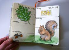 Jenny's Sketchbook: A Squirrel in my Sketchbook