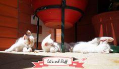 Os gatinhos fizeram 1 mês de vida no passado dia 8 de Agosto. Infelizmente, um dos bebés morreu. Foi...