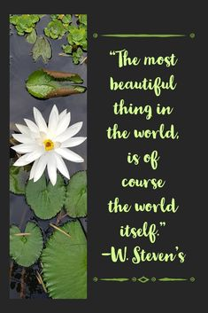 Free Advice, Travel Quotes, Plant Leaves, Most Beautiful, Journey, Inspirational Quotes, Inspire, This Or That Questions, World