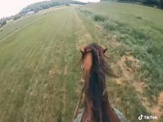 Cute Horses, Pretty Horses, Horse Love, Beautiful Horses, Animals Beautiful, Funny Horses, Baby Horses, Wild Horses, Funny Horse Videos