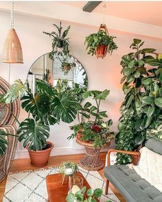 """🌿House Plant Community🌱 on Instagram: """"Thanks a lot @themacramejungle for sharing this lovely pic with the @house_plant_community . . . . #plantsmakepeoplehappy…"""" Tropical Plants, Plant Decor, House Plants, Succulents, Planters, Indoor, Garden, Inspiration, Instagram"""