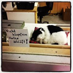 Auch Katzen nutzen die Feiertage