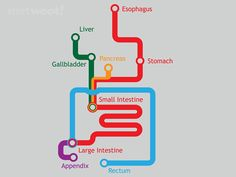A really clear representation of the digestive system for those who struggle with A and P. The Gastrointestinal System Represented As A Subway Map. Nursing Diagnosis, Nursing Career, Nursing Tips, Nursing Notes, Nursing Process, Sistema Gastrointestinal, Gi System, Only Shirt, Subway Map