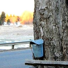 If it's Spring, it's Maple Time!  A tutorial on how to tap, and myo maple syrup!  Great info!