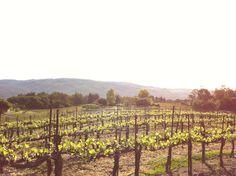 Jack London Vineyard, Sonoma Valley.