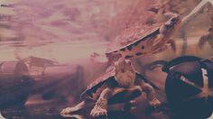 My ninja turtles...