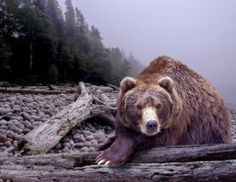 Bear Photograph - Some Days You Eat The Bear Some Days The Bear Eats You by Randall Nyhof
