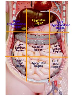 abdominopelvic regions and quadrants