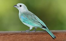 List of birds of Trinidad and Tobago - Wikipedia, the free encyclopedia