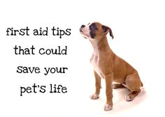 In case of emergency, these tips might save your pet's life!
