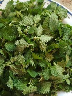Herbs, Plants, Recipes, Night, Food, Bees, Recipies, Essen, Herb